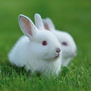 Bunnies & rabbits